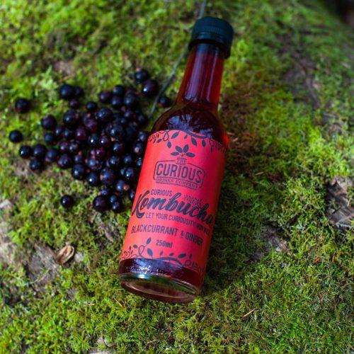 Blackcurrant-and-Ginger-Kombucha-on-moss